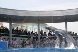 うみたまご水族館